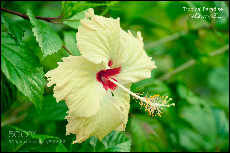 Photograph Seychelles Flower by Igor M on 500px