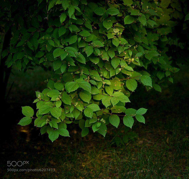 Photograph свет by Artur Arutyunov on 500px