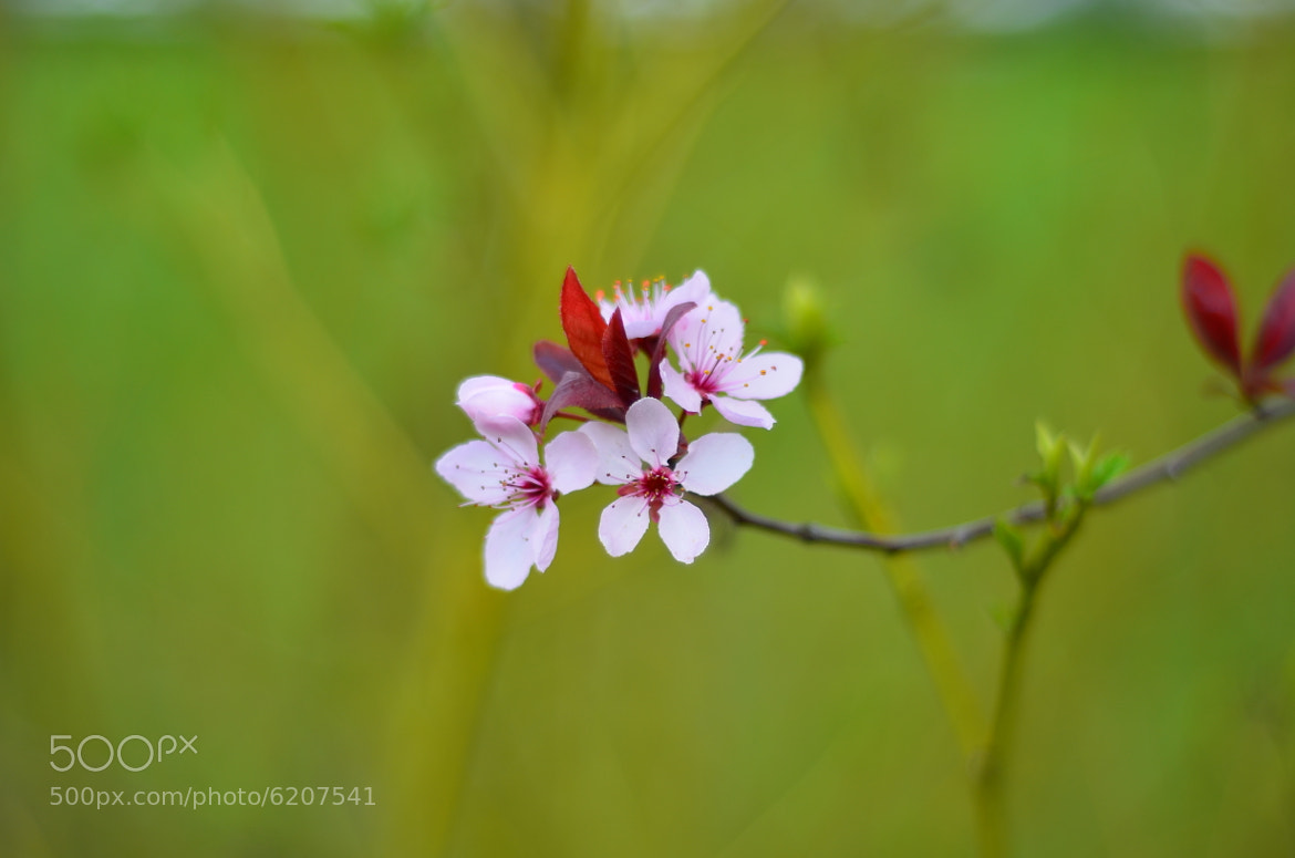 Photograph First Flowers of Spring by The Oal on 500px