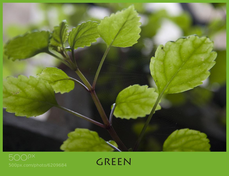 Photograph Green by Geert Van der Straeten on 500px
