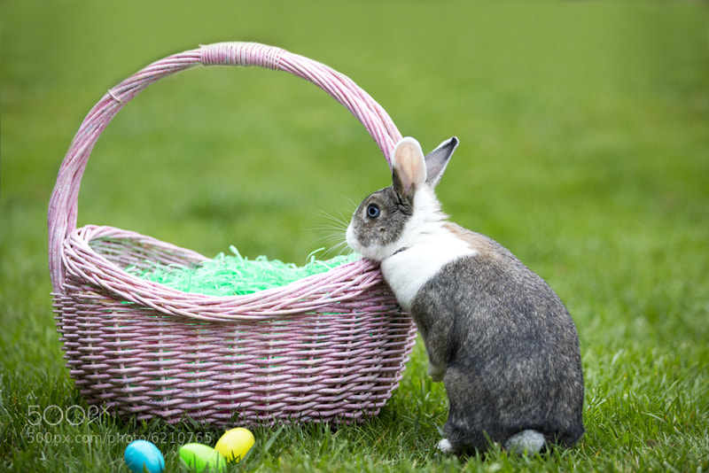 Photograph The Real Easter Bunny by jmcguire on 500px pLAOAUnb