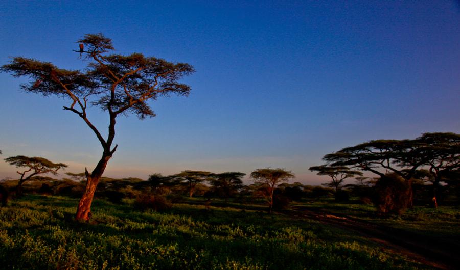 Landscape close to Ndutu Lake, Tanzania