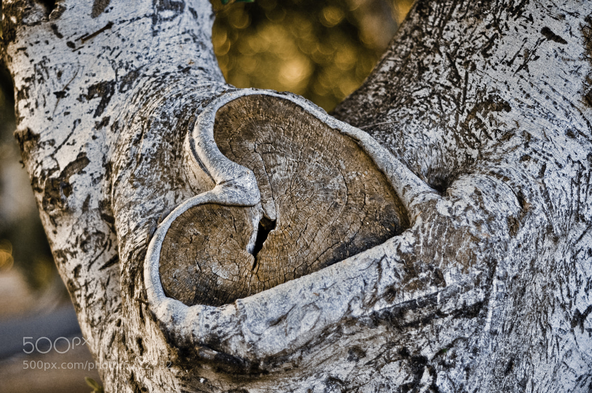 Photograph Broken Heart by Amit Zand on 500px