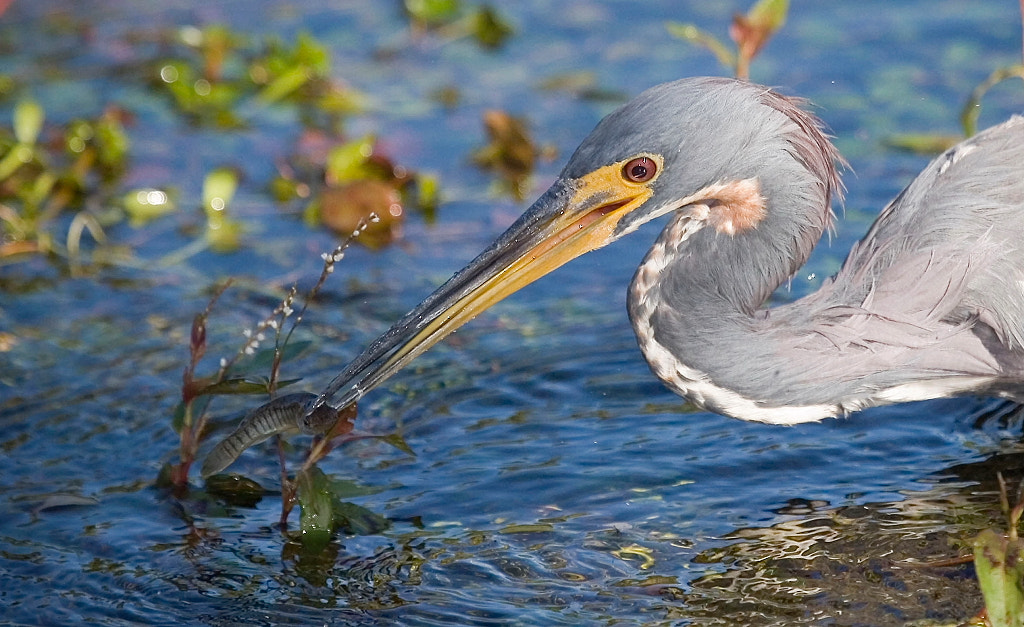Photograph Tricolored and Fish by Miguel Angel Leyva on 500px