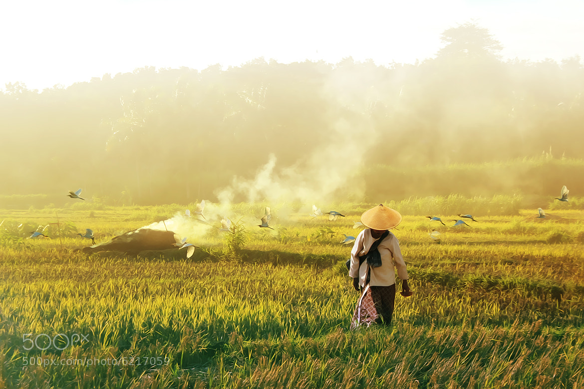 Photograph Birds and farmers by 3 Joko on 500px