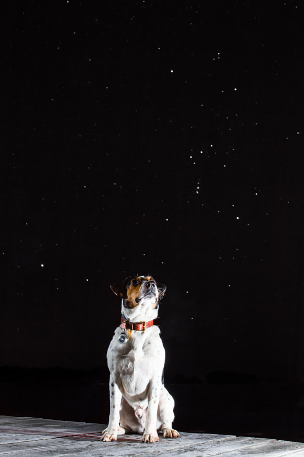 Orion and Dog by Sami Multasuo on 500px.com