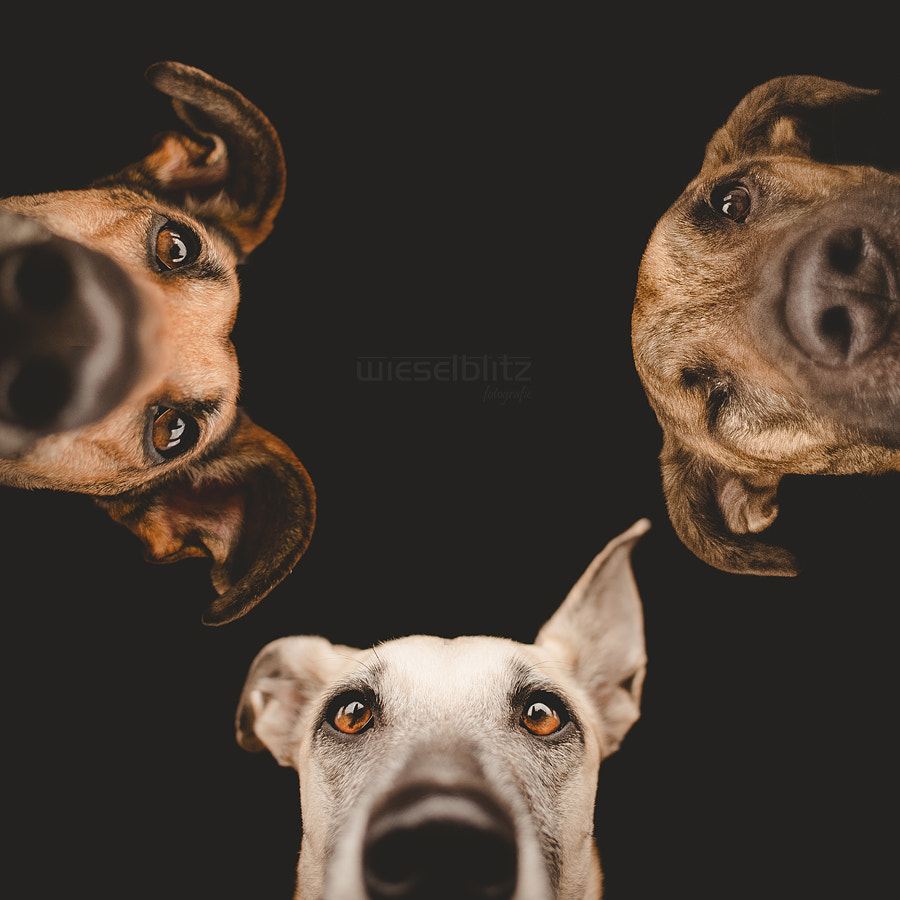 "Photograph ""Is she still sleeping?"" by Elke Vogelsang on 500px"
