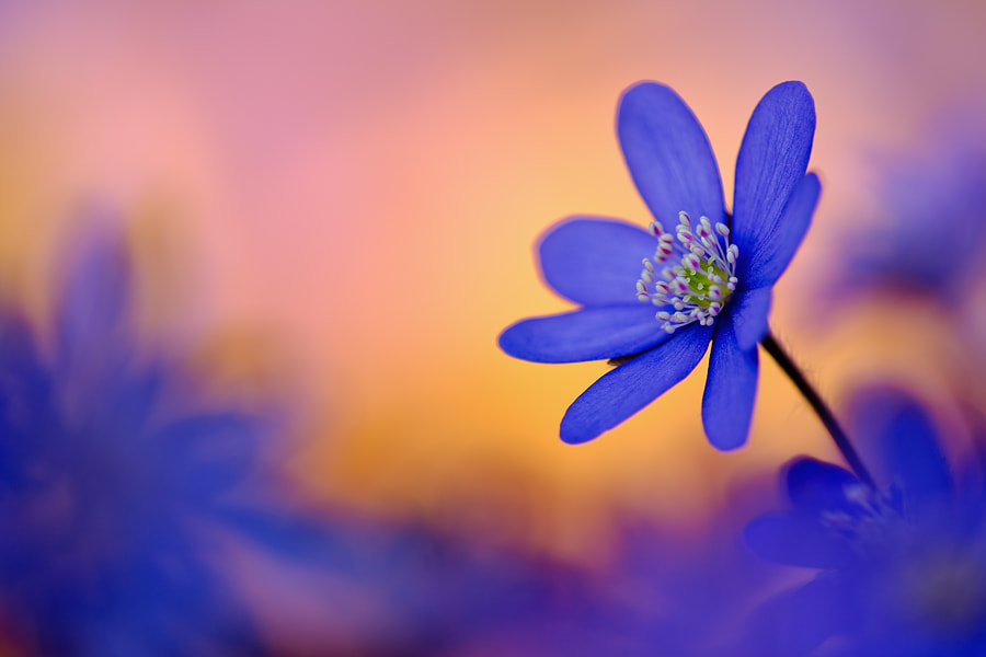 Photograph colours of spring by Martin Amm on 500px
