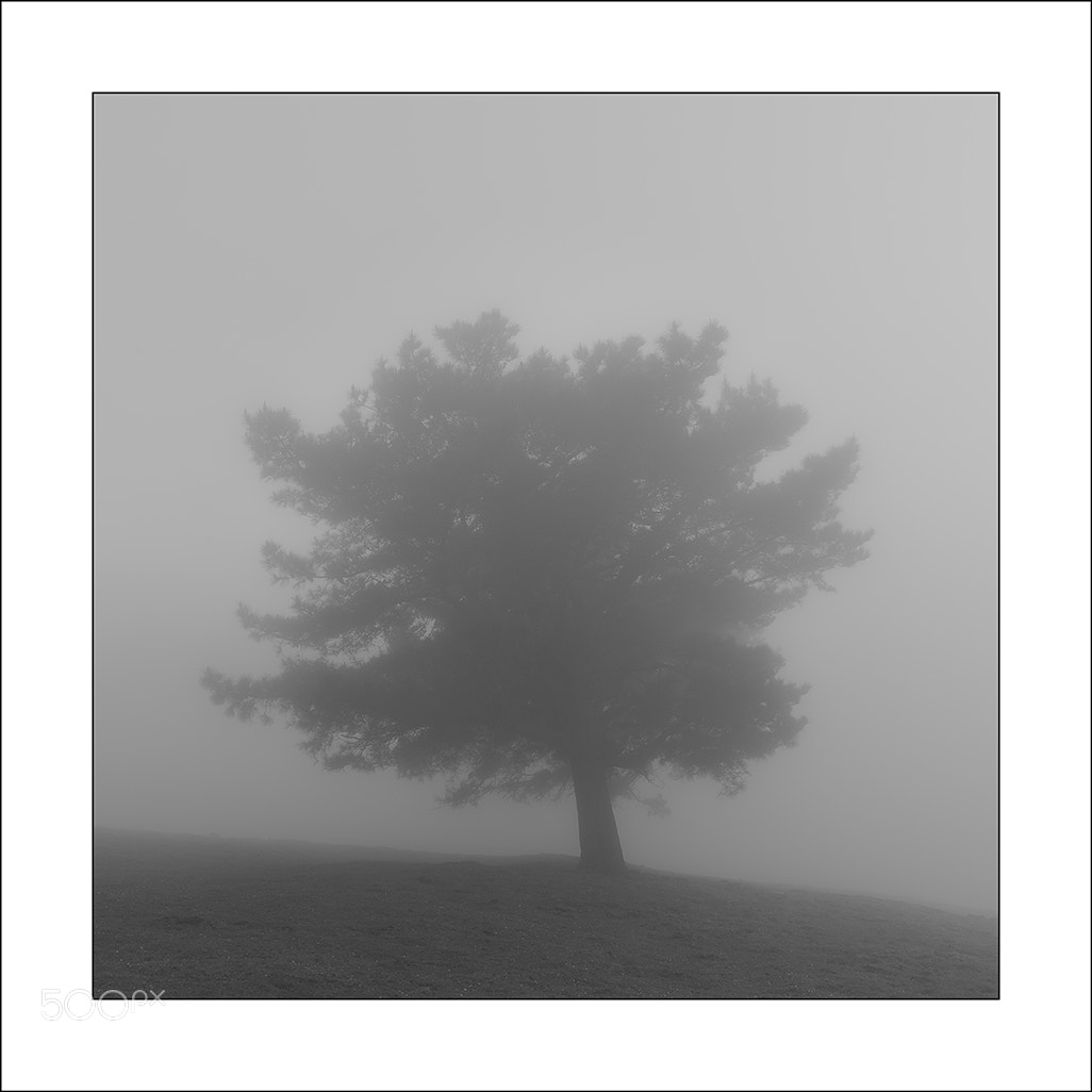 Photograph En la nube by Miguel  Cabezas on 500px