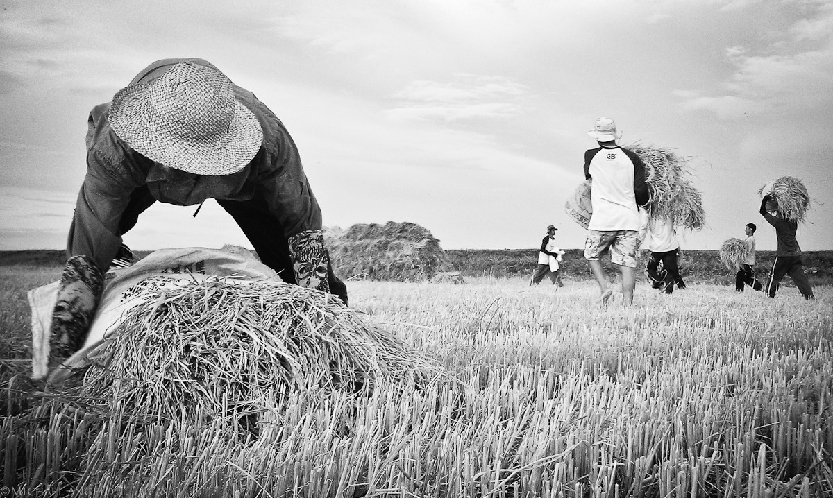 Photograph Rice, Anyone? by Michael Angelo Lucas on 500px