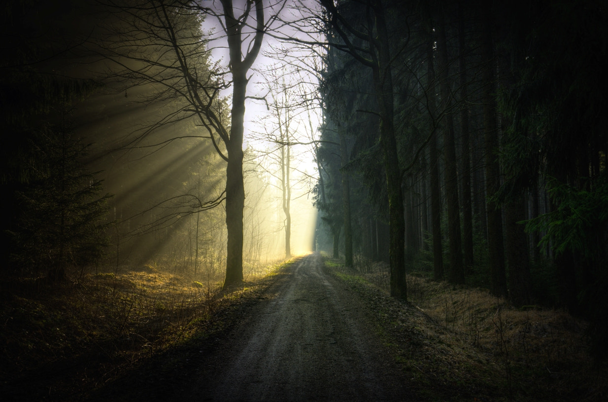 Photograph Morning Light in the Forest by Robert Böhm on 500px