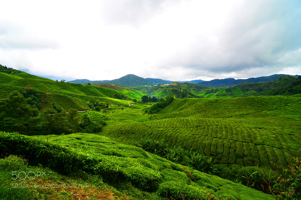 Photograph Green Land by RandyTan RnD.de.Portraits on 500px