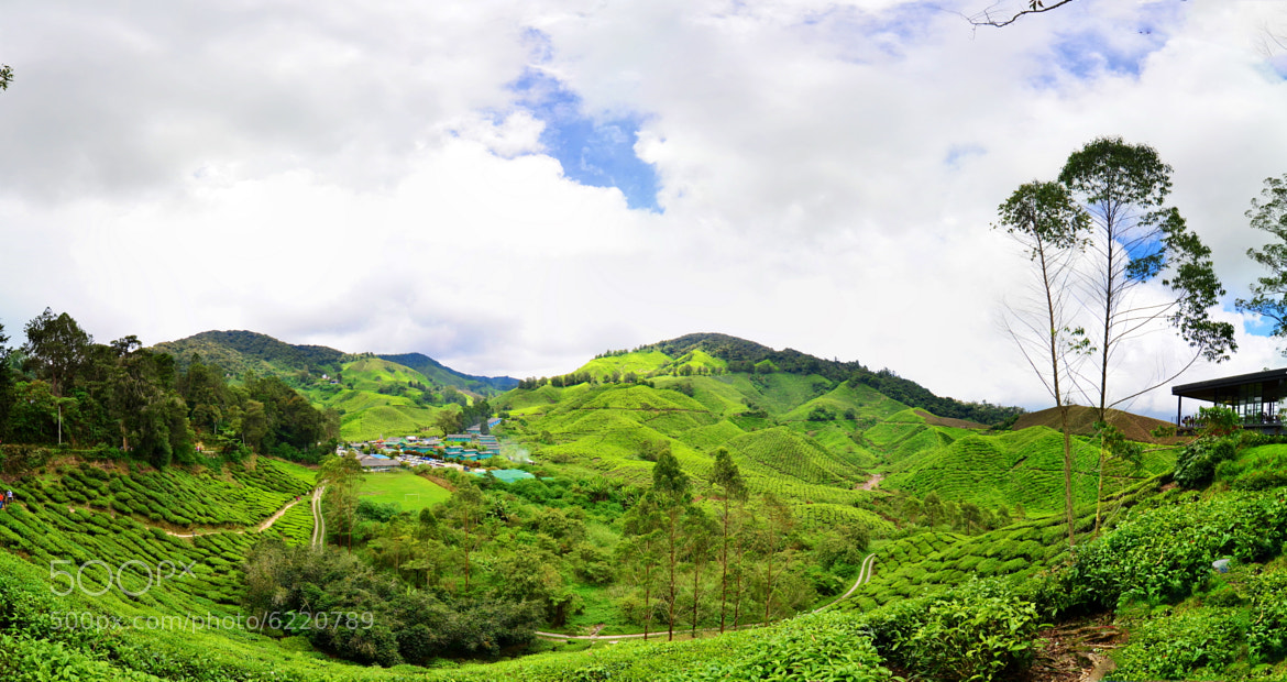 Photograph Tea Plantation by RandyTan RnD.de.Portraits on 500px
