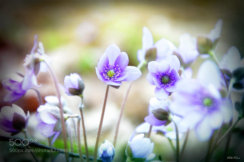 Photograph Spring flower by Viktor Korostynski on 500px