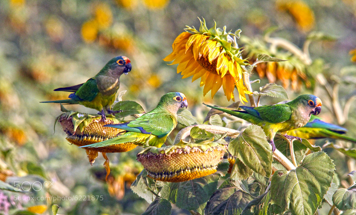 Photograph We came back....now we are three  by Itamar Campos on 500px