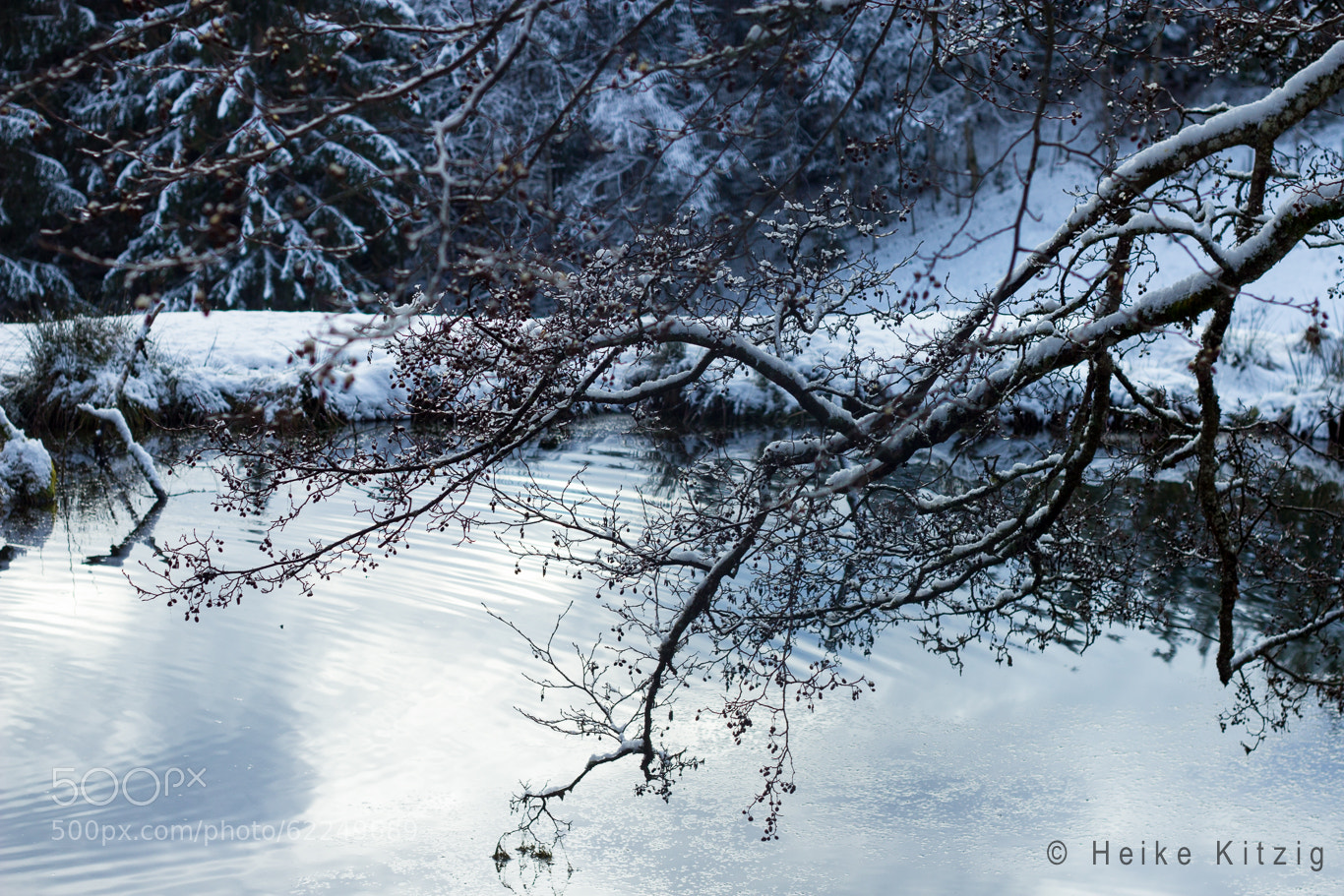 Photograph Winter tree by Heike Kitzig on 500px