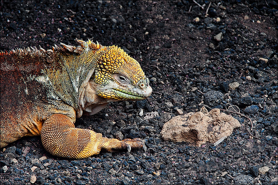 Photograph Iguana by Jimbos Padrós on 500px