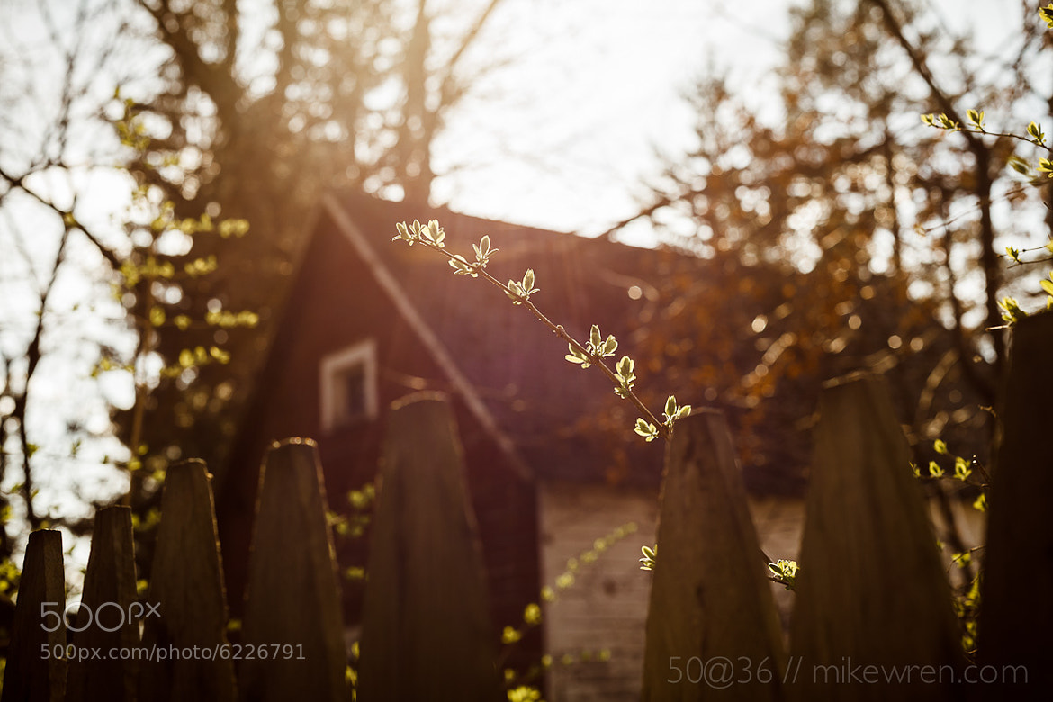 Photograph Day 51: Spring is Springing by Mike Wren on 500px