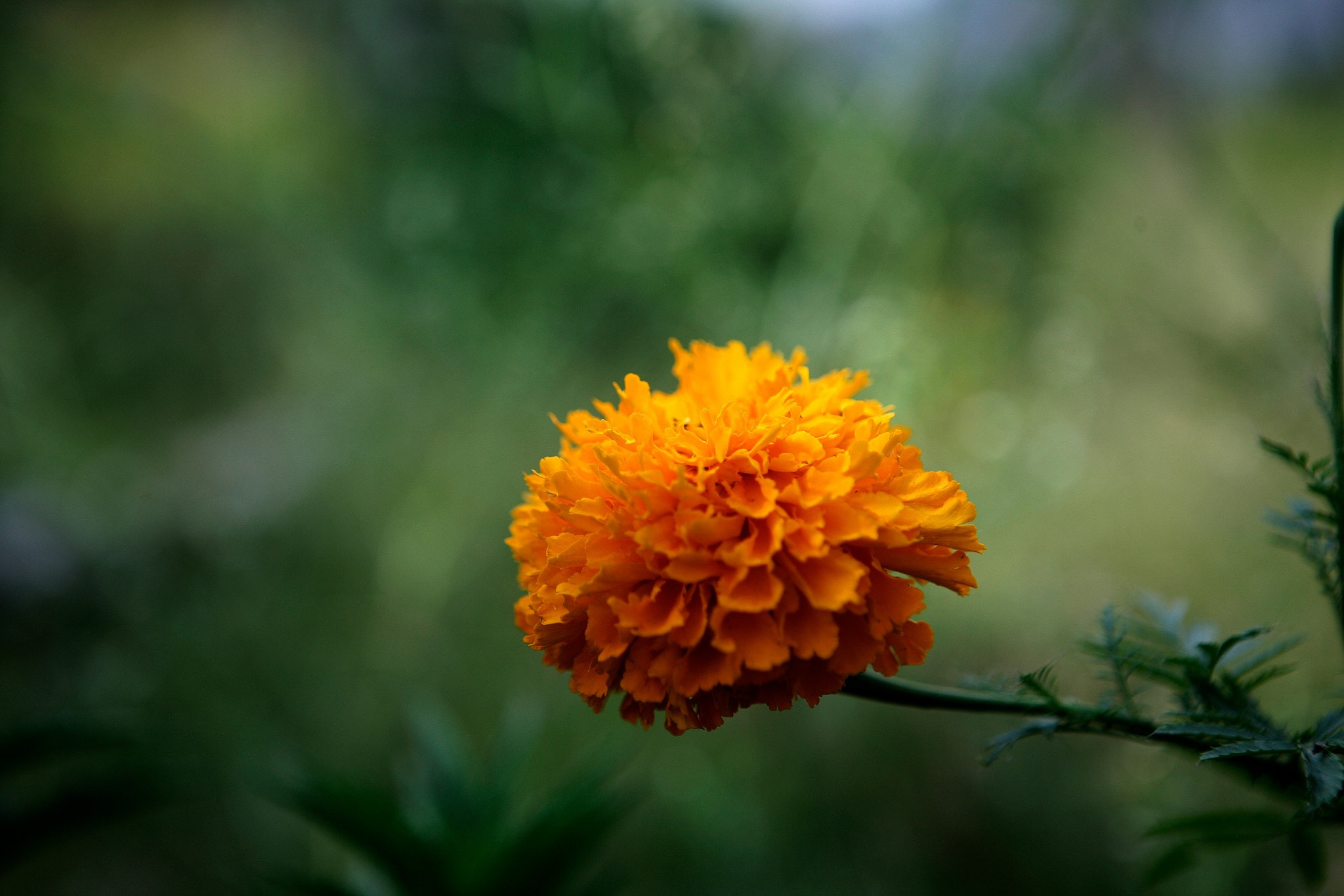 Photograph Pretty yellow flower of the land by Cristobal Garciaferro Rubio on 500px