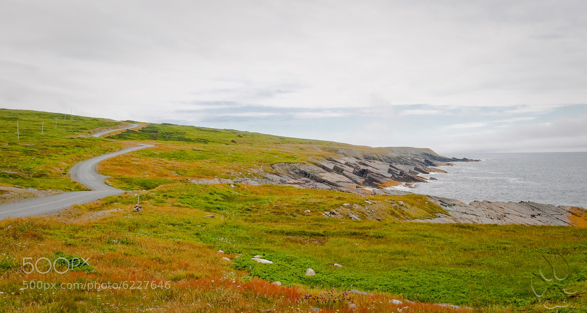 Photograph …lonely road to Cape Race... by michael shaffer on 500px