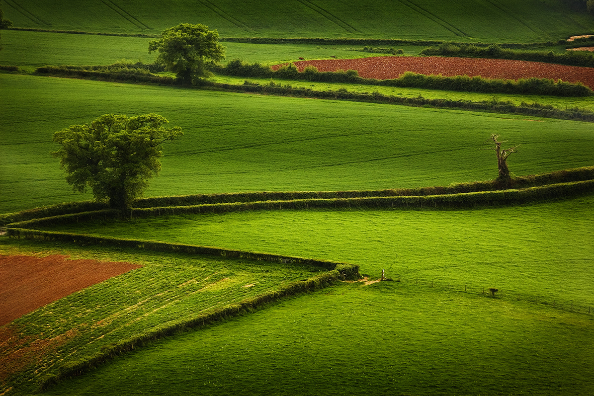 Photograph Another Green World by Milan Dimitrijevic on 500px