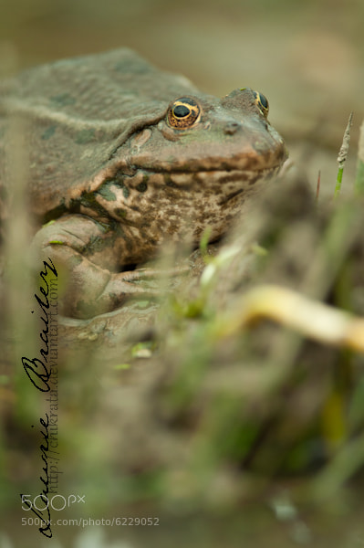 Photograph Camouflage by Lawrie Brailey on 500px