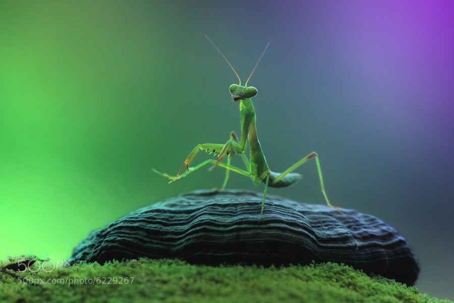 Photograph Let's Dance by Arief Perdana on 500px
