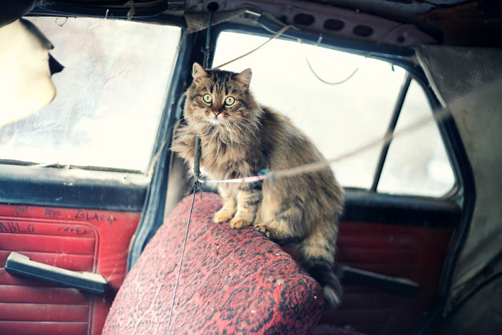 Photograph rock in roll cats by Firko :) on 500px