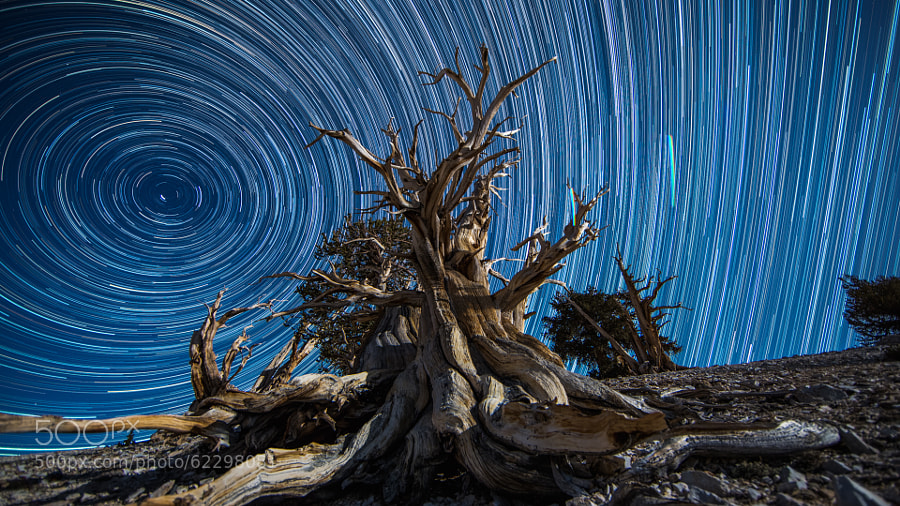 Photograph Bristlecone Traveling without Moving by Andrew Walker on 500px