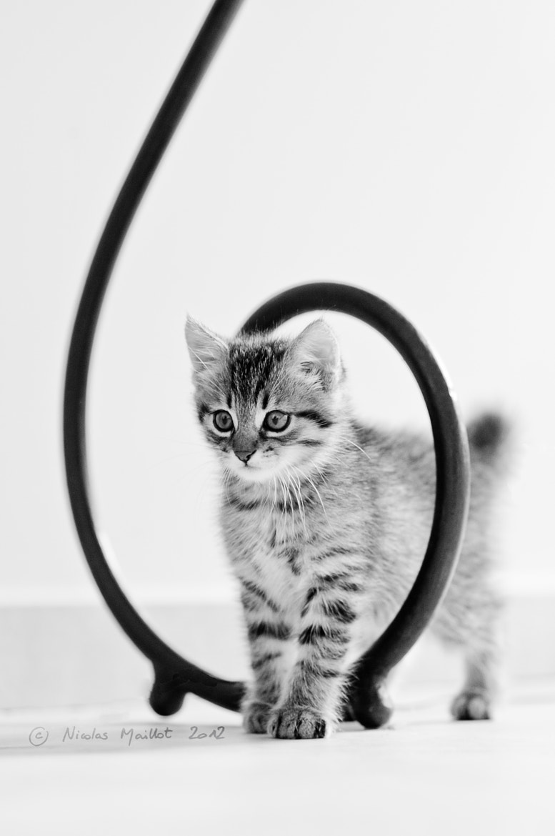 Photograph Kitty vortex by Nicolas Maillot on 500px