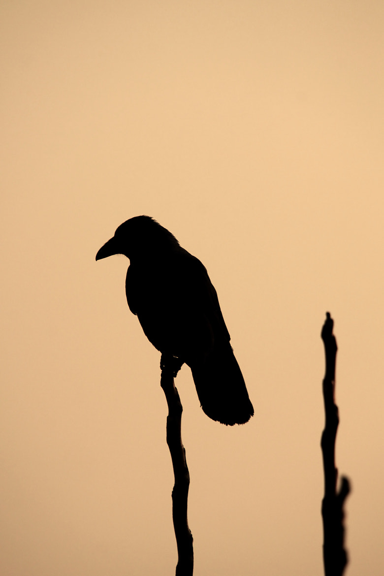 Photograph silhouettes.. by Isik Bozkurt on 500px