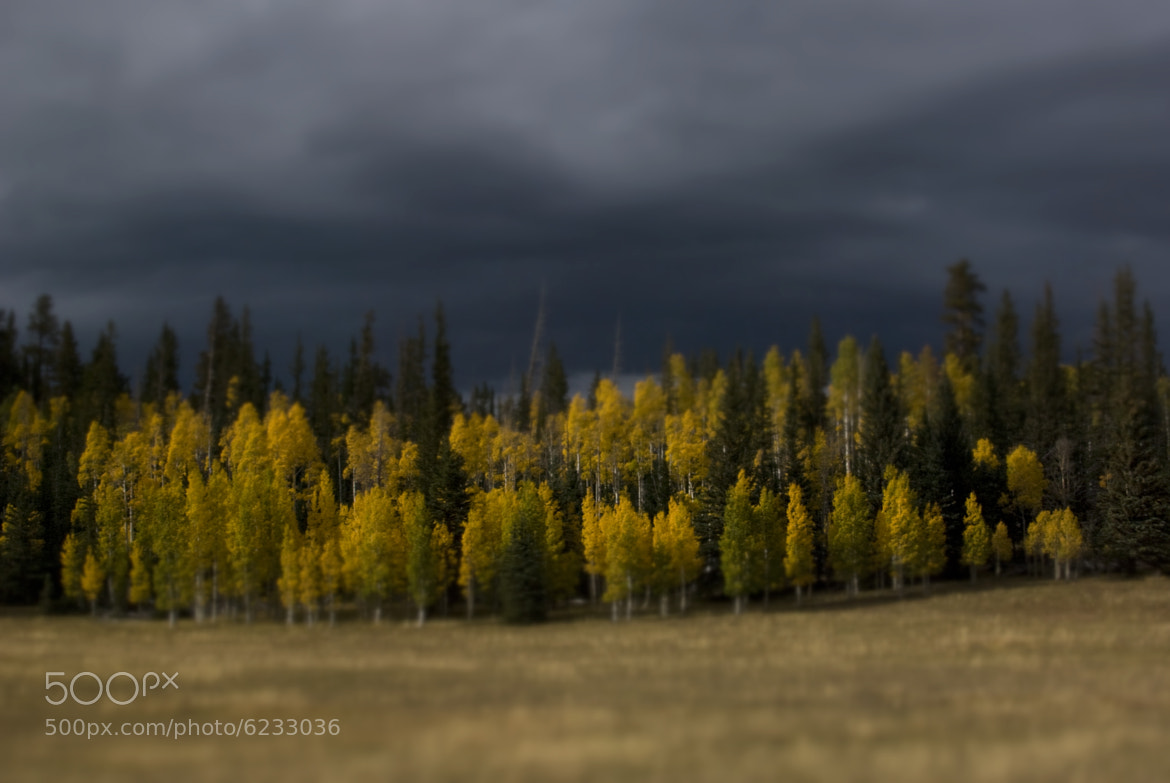 Photograph The Aspens on the North Rim by Lindsay Kaun on 500px