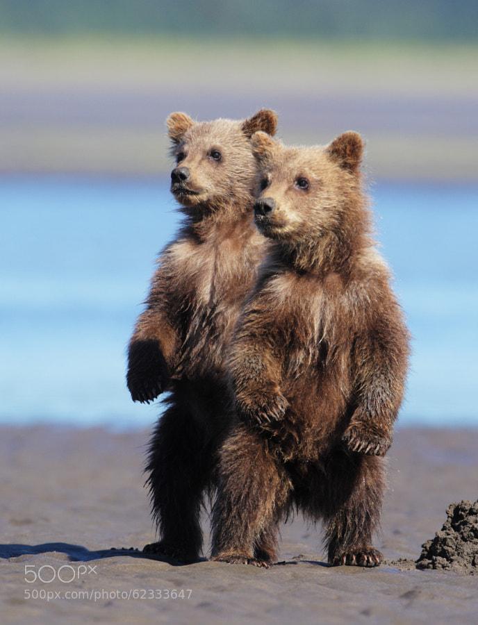 Photograph Curious Cubs by D. Robert Franz on 500px