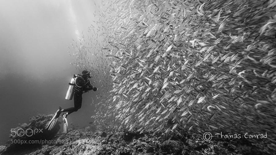 Photograph Got some fish b&w by Thomas Conrad  on 500px