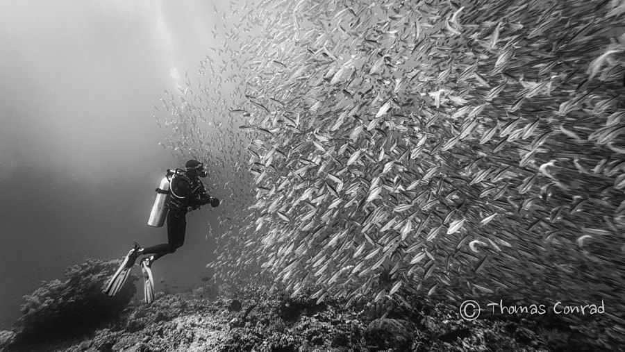 Photograph Got some fish b&w by Thomas Conrad  on 500px