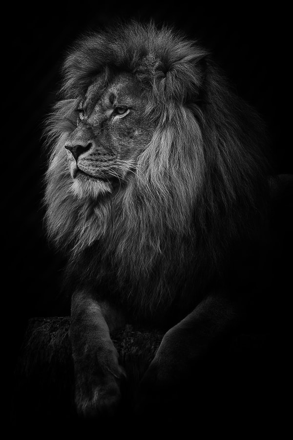 Photograph Leo by Dr. David Wiese on 500px