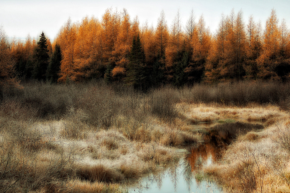 Photograph Autumn Morning by Alain Turgeon on 500px