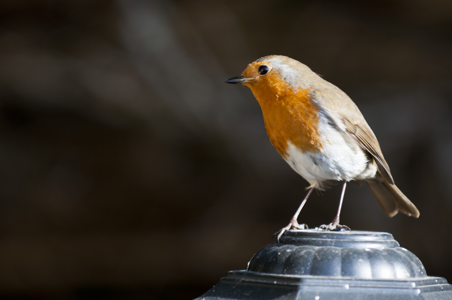 Photograph Our robin by Graham Hush on 500px
