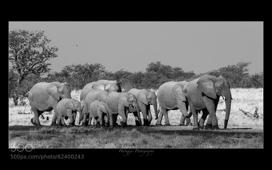 elephants at a waterhole in etosha national park, namibia