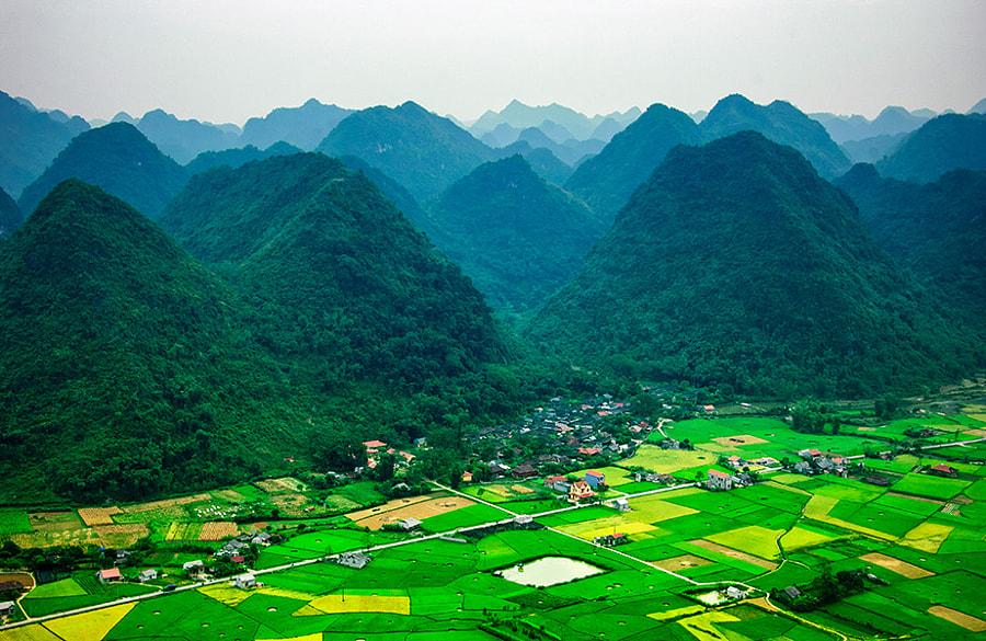 Rice field in north Vietnam