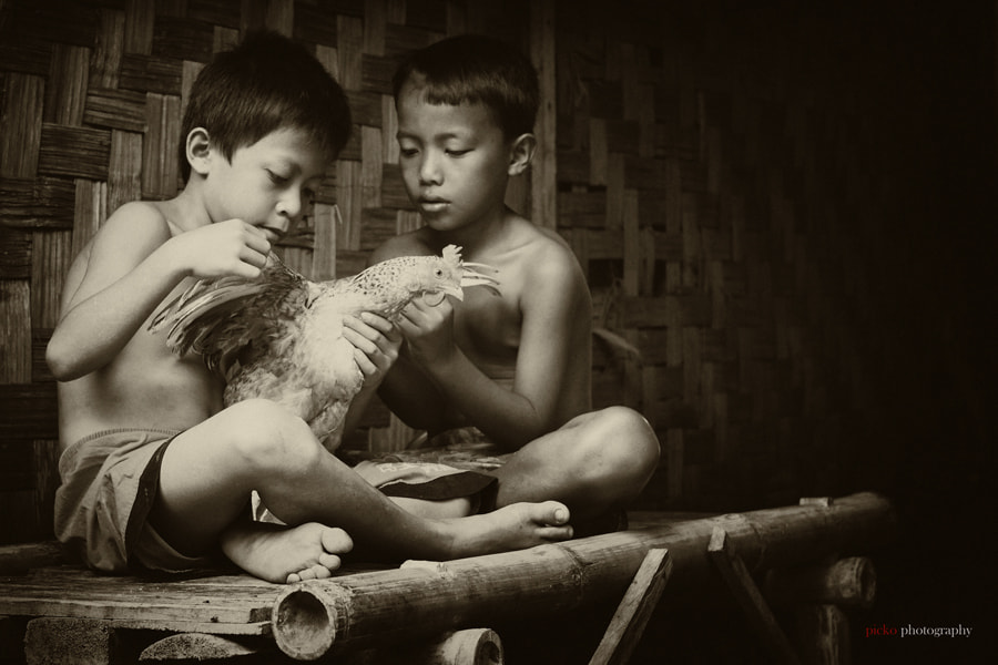 Photograph boys with a hen.. by taufik sudjatnika on 500px