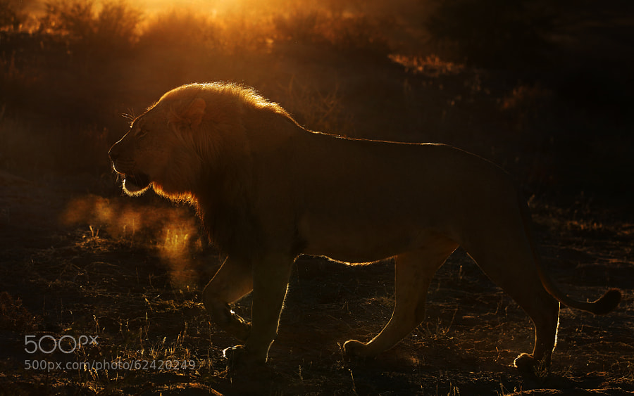 Photograph Another king by Stephan Tuengler on 500px