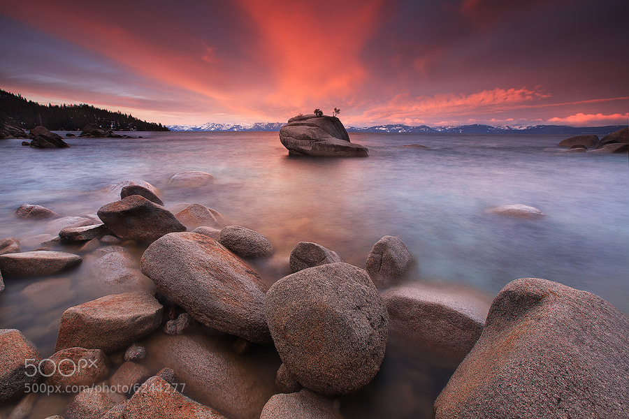 Photograph Bonsai Rock by Alan Chan on 500px