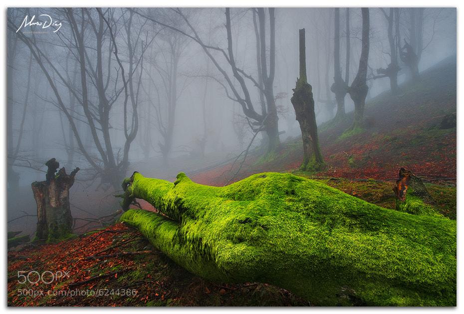 Photograph Green dead body by Alonso Díaz on 500px