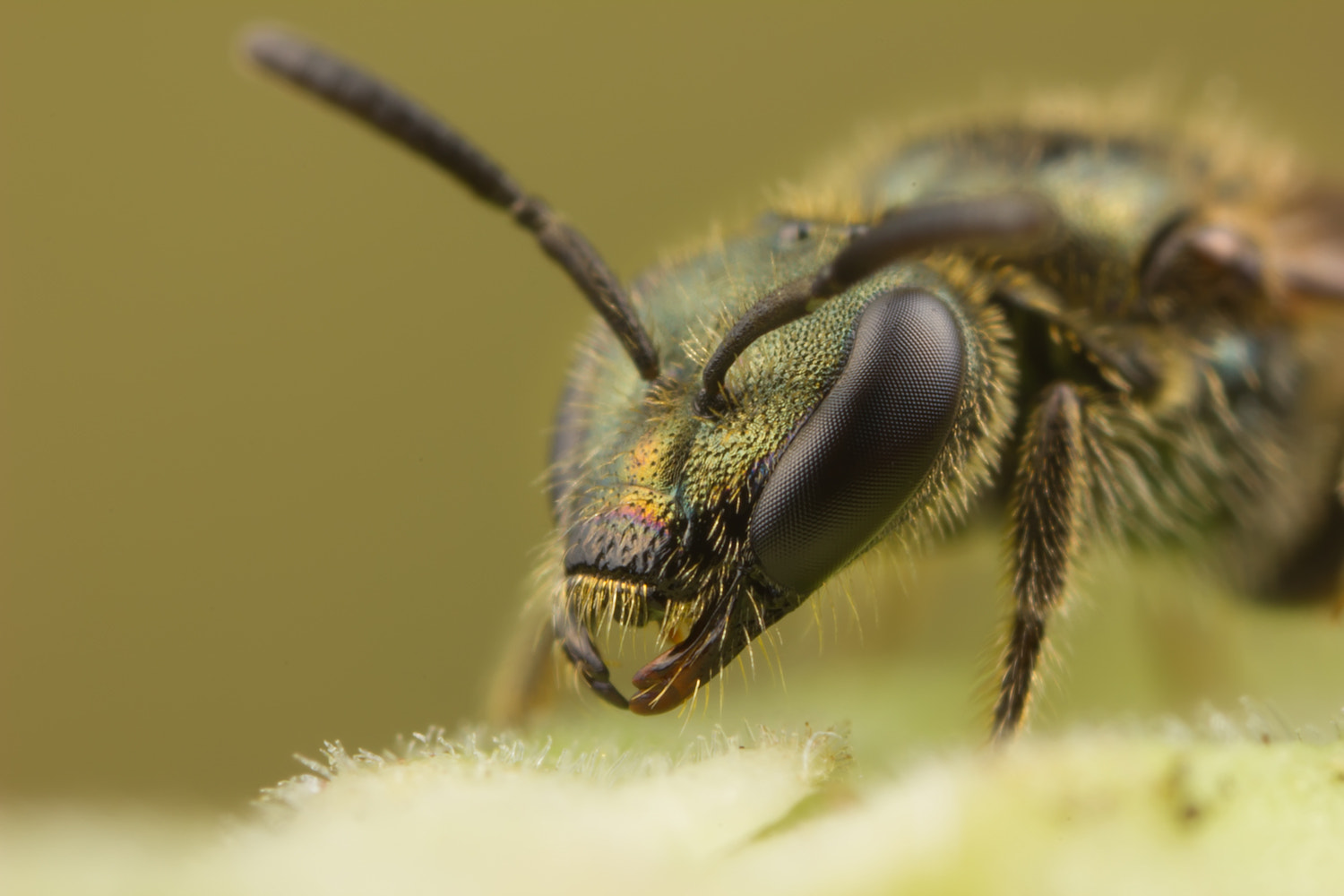 Photograph Sweet Bee by Alistair Campbell on 500px