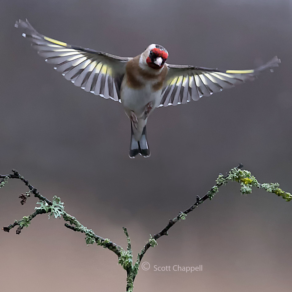 Photograph Coming in to land by Scott Chappell on 500px