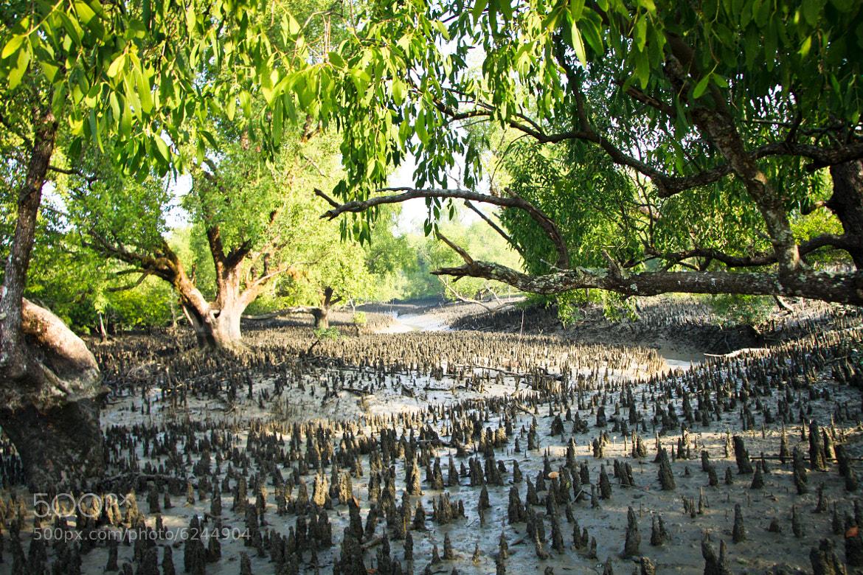 Photograph Morning in Sundarban by Sadik Shahriar on 500px