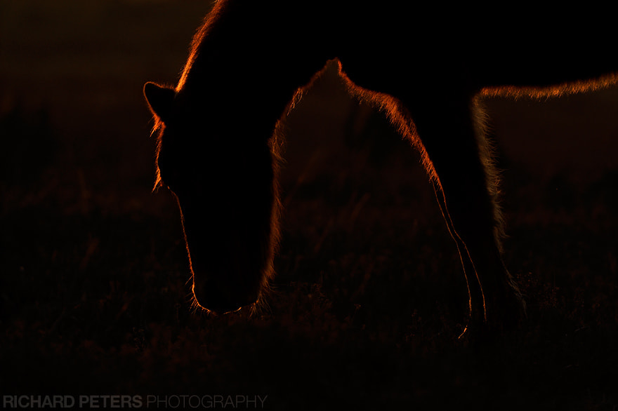 Photograph The Silhouette by Richard Peters on 500px
