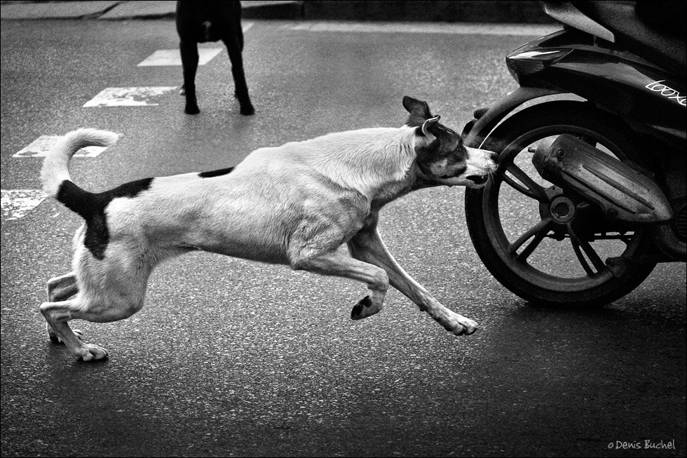 Photograph Dog's Life by Denis Buchel on 500px