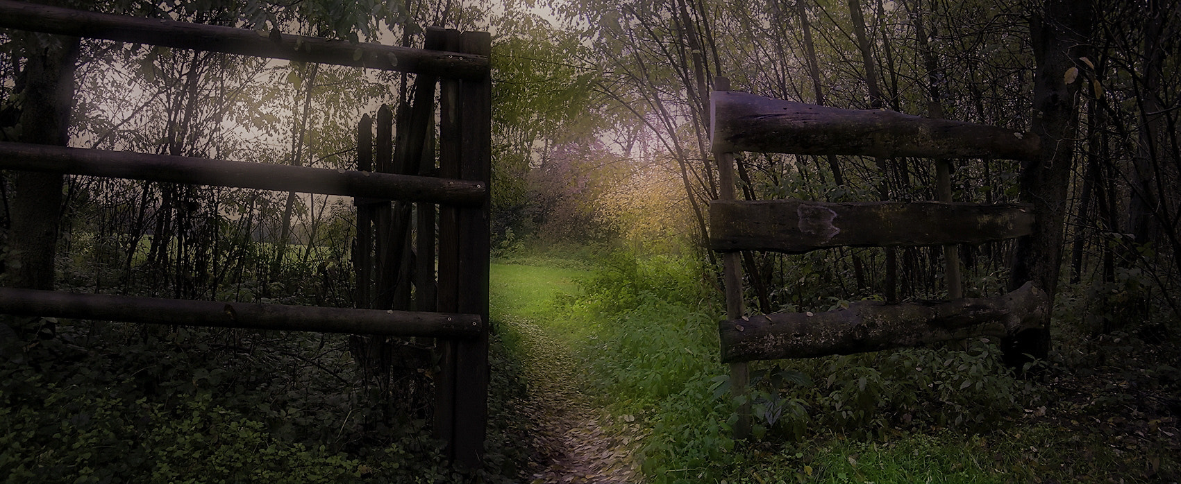 Photograph Trail in the park by Antonio Romano on 500px